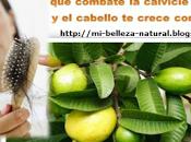 Hoja guayaba para evitar caída crecimiento rápido cabello