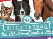 Tercer Encuentro Animalero, cumpleaños Paula, jabón coco