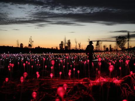 Mirando un montón de hermosas luces... Bruce Munro