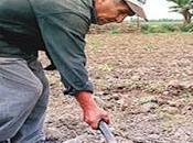 Archivan proyecto autoriza minagri adjudicar hectáreas concón topara –cañete…