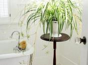 Plantas, Diseño calidad vida