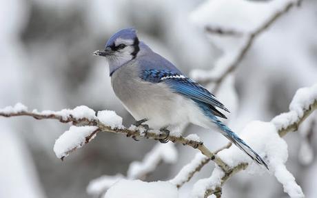 Pintando un pájaro con acuarela