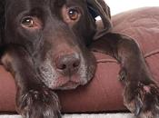 Como Hacer Cama para Perros Casa Facilmente