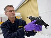 Aves muertas ahora Suecia, millones peces muertos Maryland