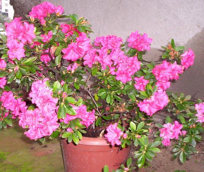 arbustos con flores imagui