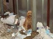 colmo crueldad, kristy, abandonada atada para muera hambre (cordoba)