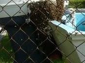 visita abejas