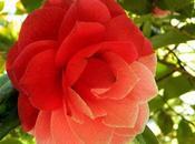Ruta Camelia: jardín Saleta primavera, mayo 2016. Camellia Route: Saleta's Garden spring, May, 1-31,