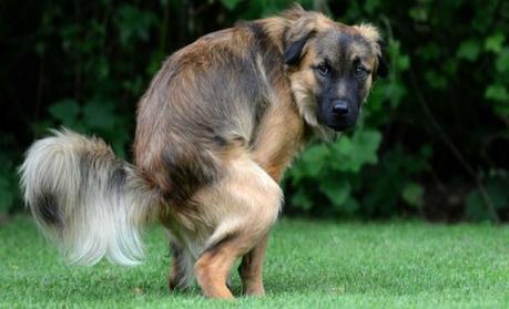 cacas-perro-salud