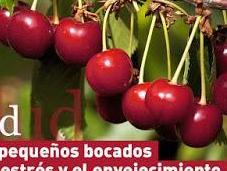 SALUD: Cerezas, pequeños bocados contra estrés envejecimiento