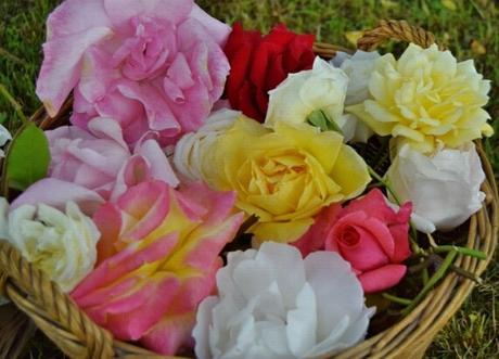 ¿Cómo hacer mermelada de rosas?