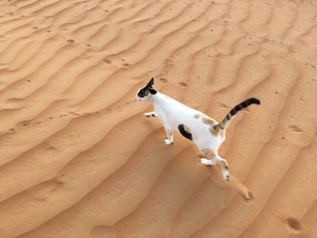 Gato con un agujero en su lado crea un gran revuelo en internet