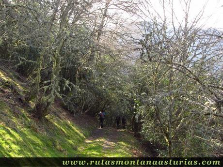 Bosque bajando a Riomolín
