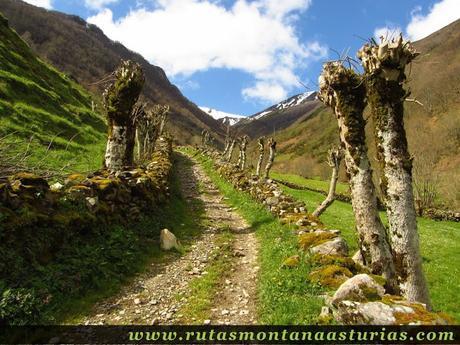 Camino por el parque natural de las fuentes del narcea