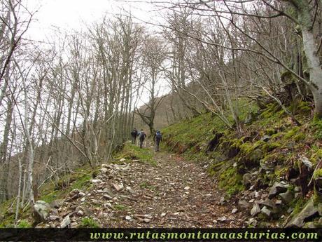 Camino pendiente en el bosque