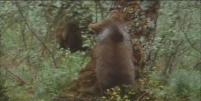 Cine Ambiental; El Oso