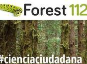 Ciencia ciudadana para luchar contra plagas enfermedades bosque