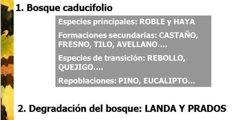 EL PAISAJE VEGETAL ESPAÑOL DE LA REGIÓN EUROSIBERIANA (CLIMA OCEÁNICO)