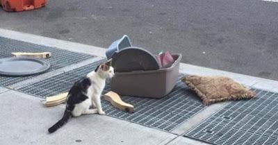 En Brooklyn, New York, un gato fue abandonado sin contemp...