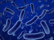¿Por enferman Bacterias?