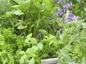 plantas atraen energías positivas