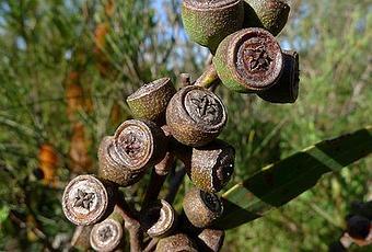 10 plantas que atraen energ as positivas paperblog - Energias positivas y negativas ...
