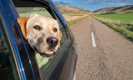 Accesorios de viaje para perro: viajar con tu mascota en muy fácil