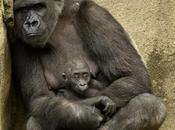 guantánamo reino animal