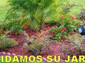 Estrena verano jardín bien cuidado