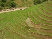 SAPA- trekking arrozales Vietnam