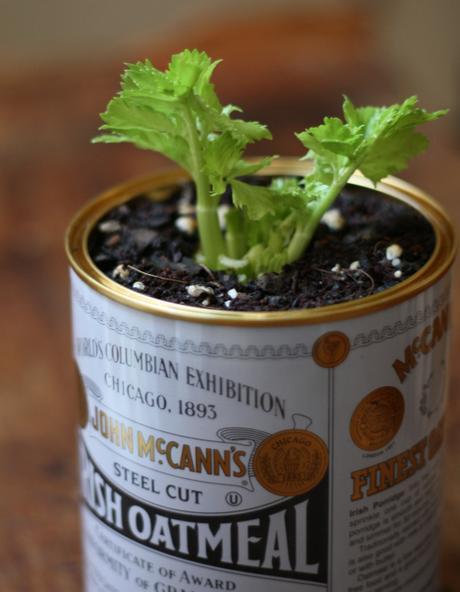 Cultiva tu propio apio organicamente