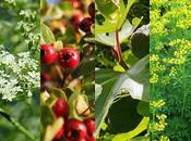 Estas plantas causan daños piel efecto rayos