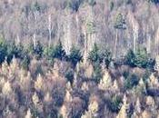 Alemania: escapadas Selva Negra desde Stuttgart