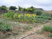 Como fertilizar huerto forma ecológica, fácil barata