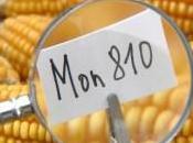 alimentos transgénicos acaban hambre mundo Nobel