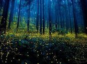 Fotografías mágicas luciérnagas verano Japón