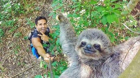 Rio tour guide takes charming sloth selfie