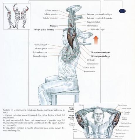 ejercicios para tríceps (1)