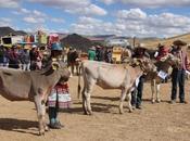 Feria Huancané: años promoviendo desarrollo agropecuario Chumbivilcas