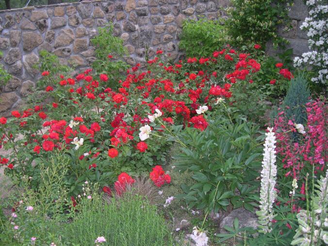 Bulbos en rocallas paperblog for Plantas para rocallas