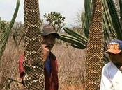 Encuentran gigante serpiente cascabel Desierto Potosino