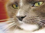 bigotes gatos