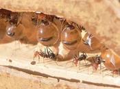 Terrario hormigas: ¿Qué debo hacer?