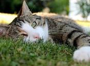 Envenenamiento Gatos Conoce Síntomas, Causas Tratamientos