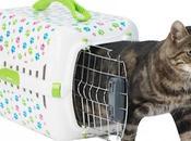 ¿Cómo introducir gato transportín?