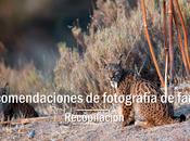 Fotografía fauna recomendaciones
