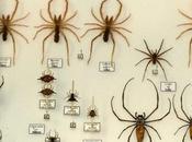¿Arañas casa?