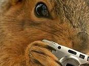 Ardilla roba cámara GoPro graba propio video naturaleza