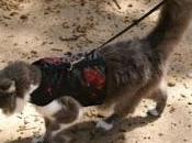 puede sacar pasear gato correa?