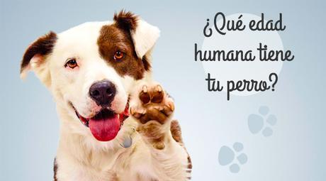 edad-humana-perros